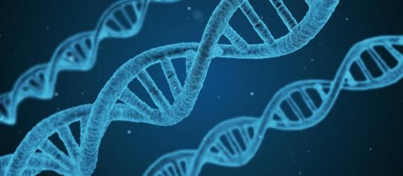 DNA qPCR quantification
